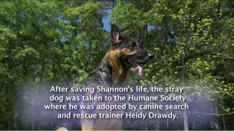 the-dog-who-saved-shannon