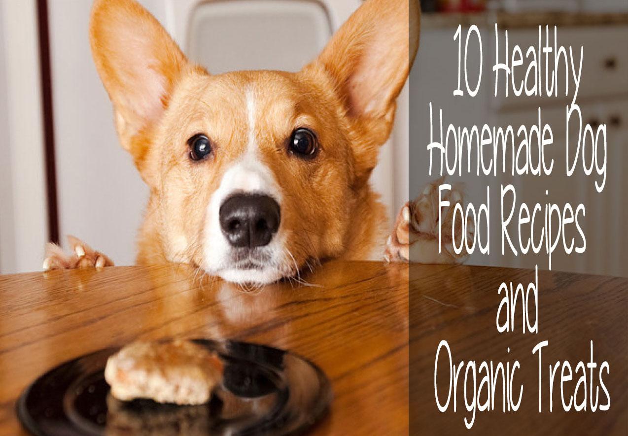 10 Healthy Homemade Dog Food Recipes
