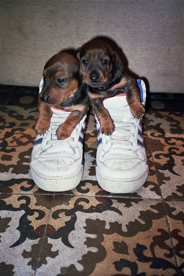 22 Of The Most Adorable Puppies In Shoes