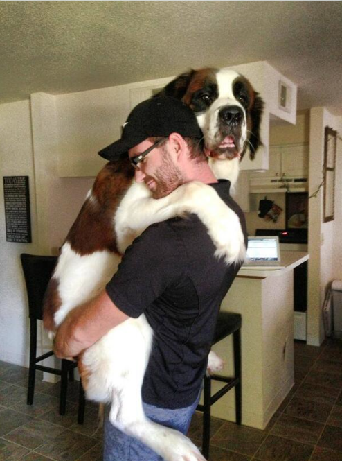 31 Heart Warming Images Showing The Magical Bond We Have With Our Dogs 15
