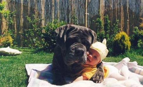 31 Heart Warming Images Showing The Magical Bond We Have With Our Dogs 17