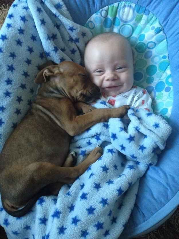 31 Heart Warming Images Showing The Magical Bond We Have With Our Dogs 23