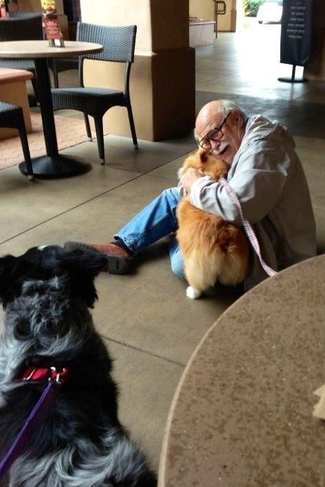 31 Heart Warming Images Showing The Magical Bond We Have With Our Dogs 3