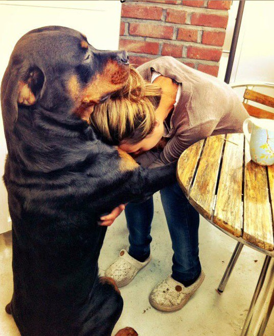 31 Heart Warming Images Showing The Magical Bond We Have With Our Dogs 31