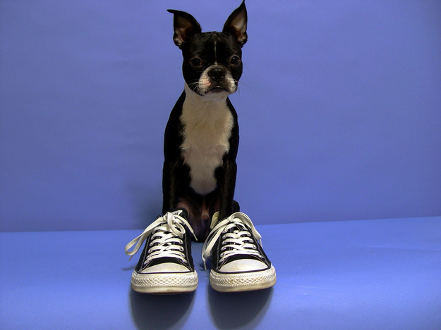 puppies shoes