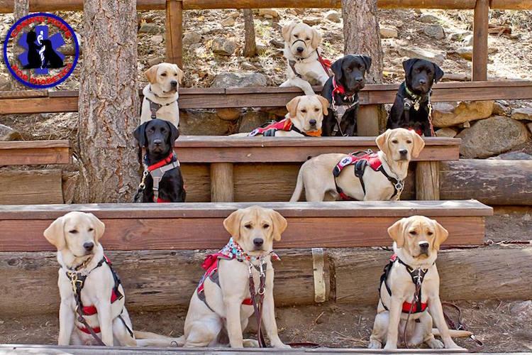 pups diabetic alert